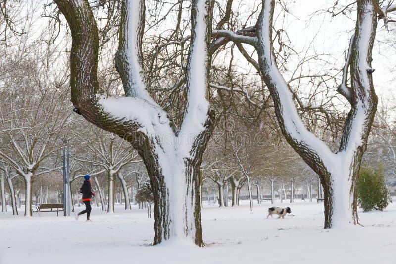 Parkera med snö-, kvinna- och hundspring fotografering för bildbyråer