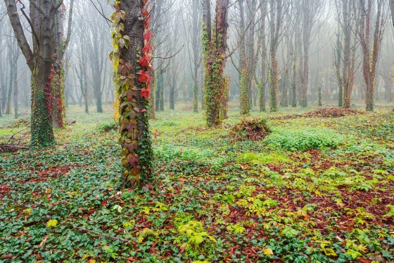 Parkera med träd i dimma arkivbild