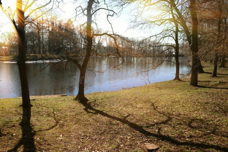 Parkera träd på floden morgonstrålarna av den varma vårjorden för solen arkivbild