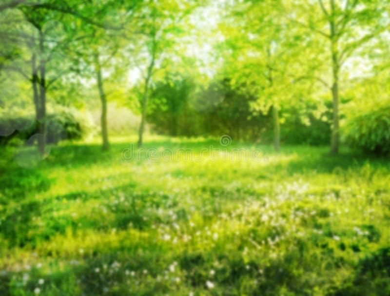 Parkerar den mjuka fokusen gjort suddig abstrakt bakgrundsträdet och gräs i sommar arkivfoton