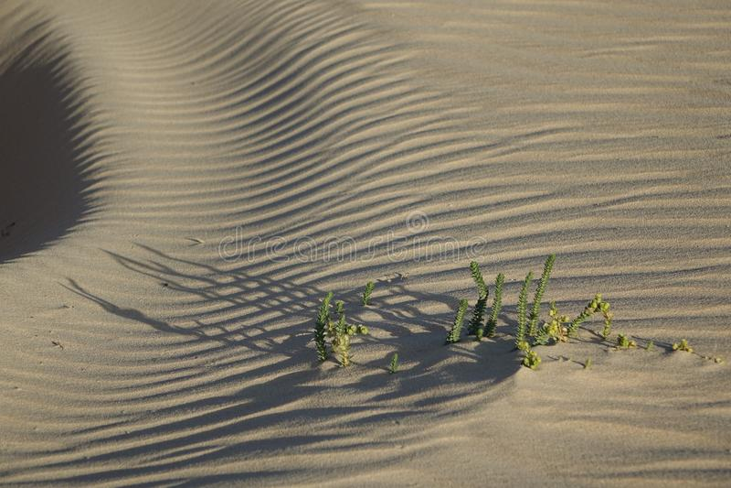 Parkerar den sena eftermiddagen för den låga solen, i det naturligt, Corralejo, Fuertevent royaltyfria bilder