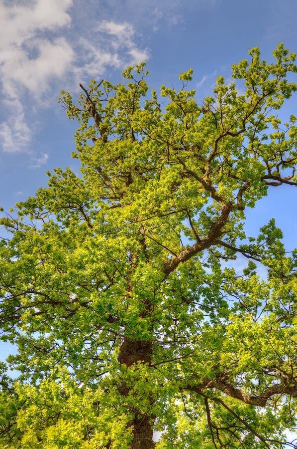 Parkerar det härliga trädet fodrade avenyn på Lyme, Disley, Stockport, UK royaltyfri bild