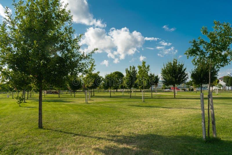 A parkerar med unga träd, grönt gräs på en härlig sommardag Himlen är blå med härliga moln royaltyfri foto
