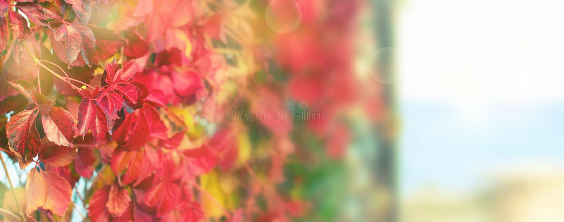Parkerar naturlig röd lövverk för banerhöstväxten på för det härliga den selektiva fokusen höstlandskapet för stranden royaltyfri fotografi