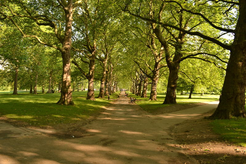 Parkerar solig avenygräsplan för högväxta träd London royaltyfri bild