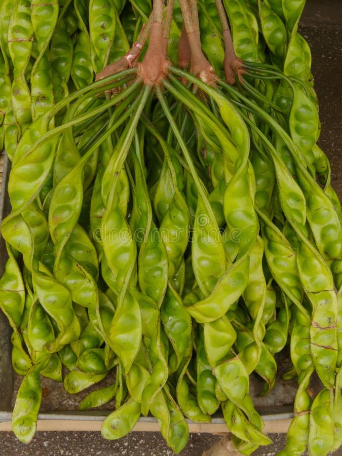 Parkia is tropical stinking edible beans in local market Thailand. stock photography