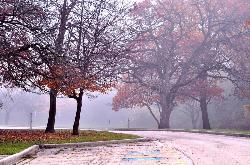 Parking lot in the park in late autumn. Oak trees in a foggy November morning. Busse Woods near Elk Grove Village IL, USA royalty free stock photos