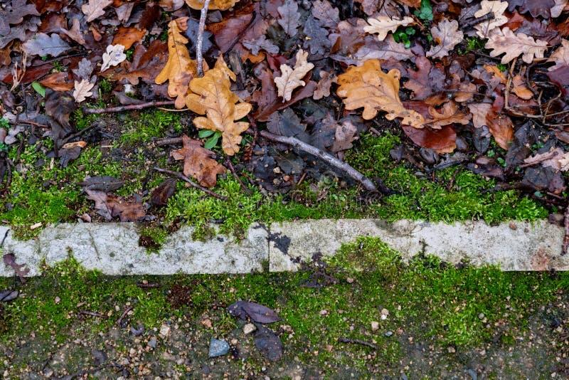 Parkland-grond met rechte lijn van steengrenzen stock fotografie