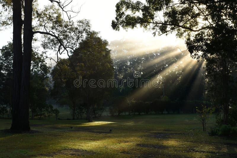 Parkland z słońcem przez mgły obrazy stock