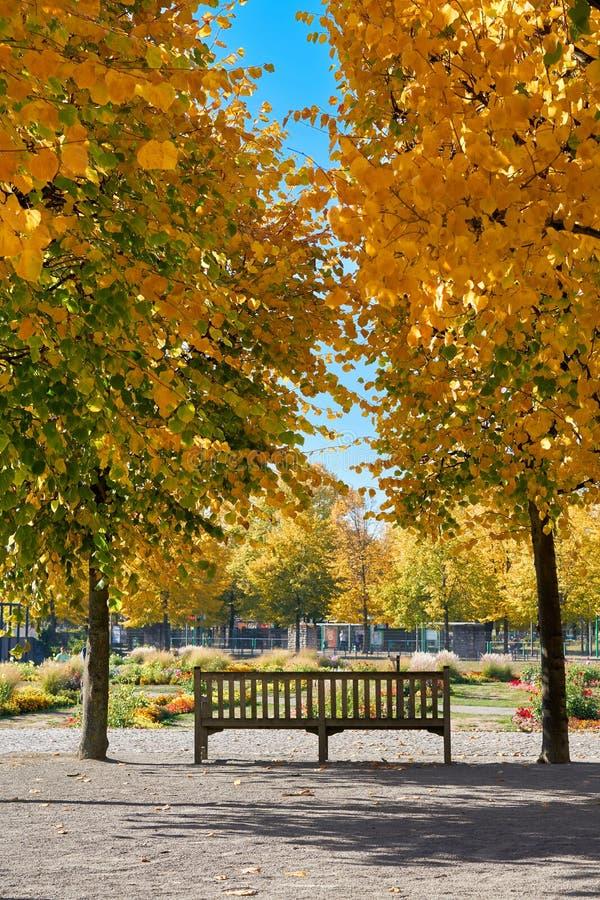 Parkowa ławka w jesiennym parku fotografia royalty free