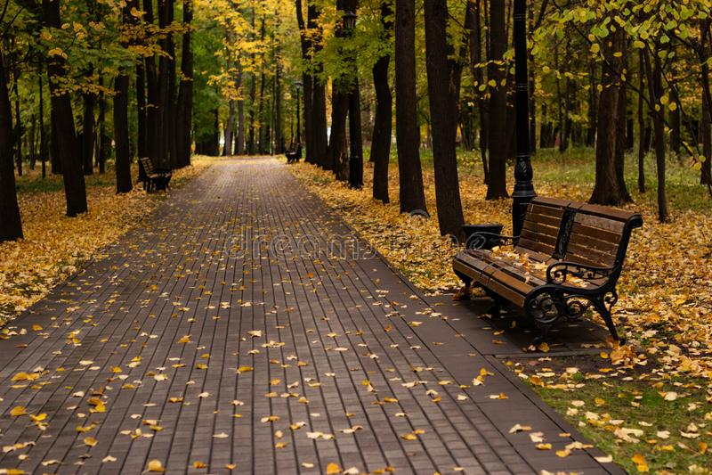 Parkowa ławka otaczająca Złotymi jesień liśćmi obraz stock