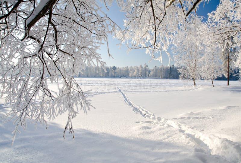 parkowa śnieżna zima obraz royalty free