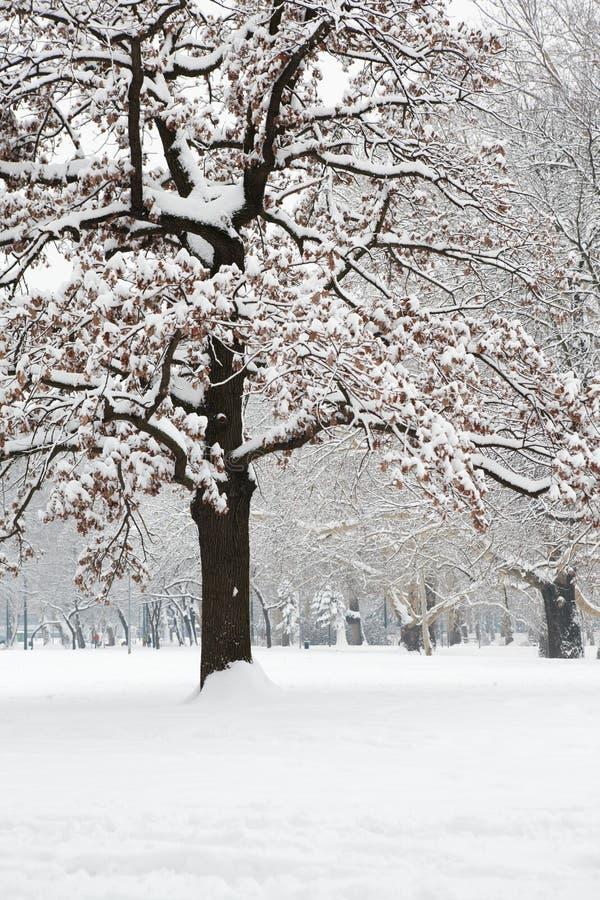 parkowa śnieżna zima zdjęcie stock