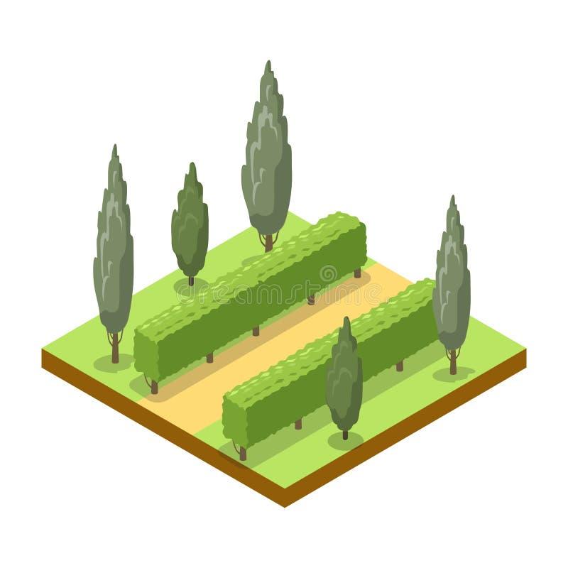 Parkowa aleja z drzewo isometric 3D ikoną ilustracji