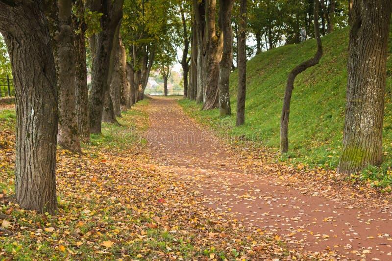 parkowa jesień ścieżka zdjęcie royalty free