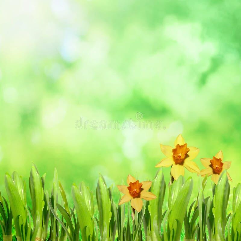 Parkowa natura z trawą zdjęcie royalty free