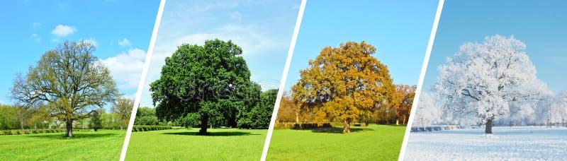 Parkowa panorama - Four Seasons obrazy stock