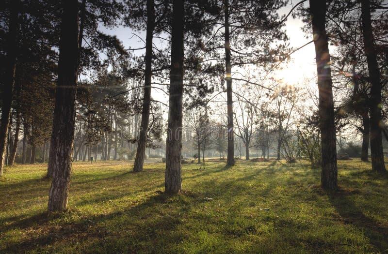 parkowa scena zdjęcie stock