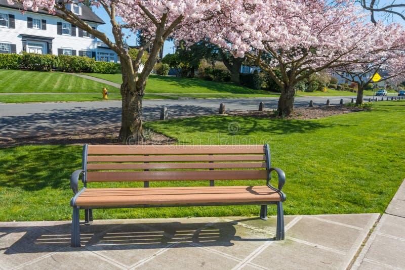 Parkowej ławki Czereśniowych drzew Mieszkaniowa ulica fotografia royalty free