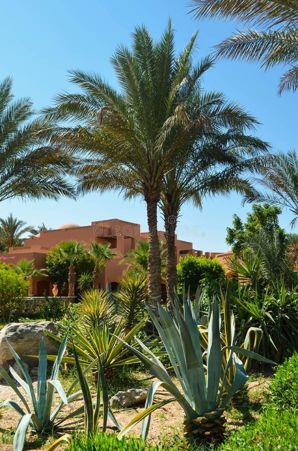 parkowi palm drzewa zdjęcia stock