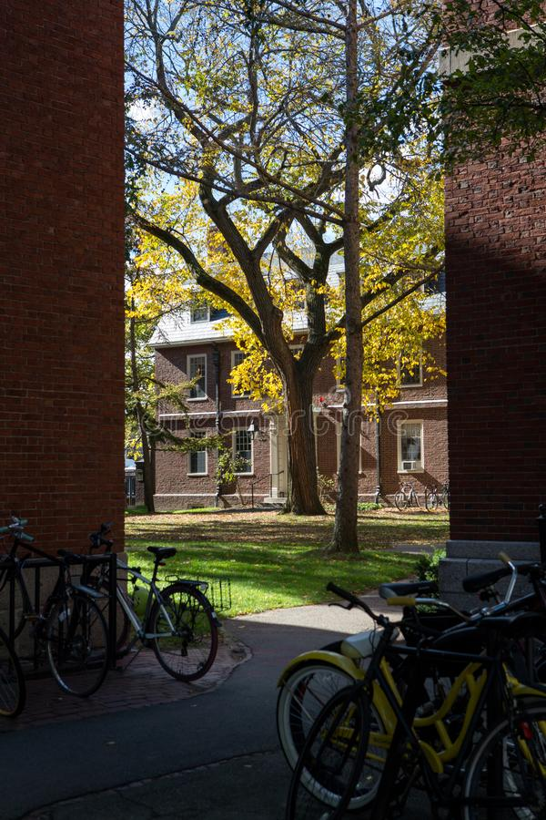 parkowy Cambridge uniwersytet obrazy royalty free