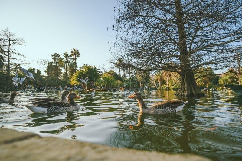 Parkowy De Los angeles Ciutadella, Barcelona zdjęcia royalty free