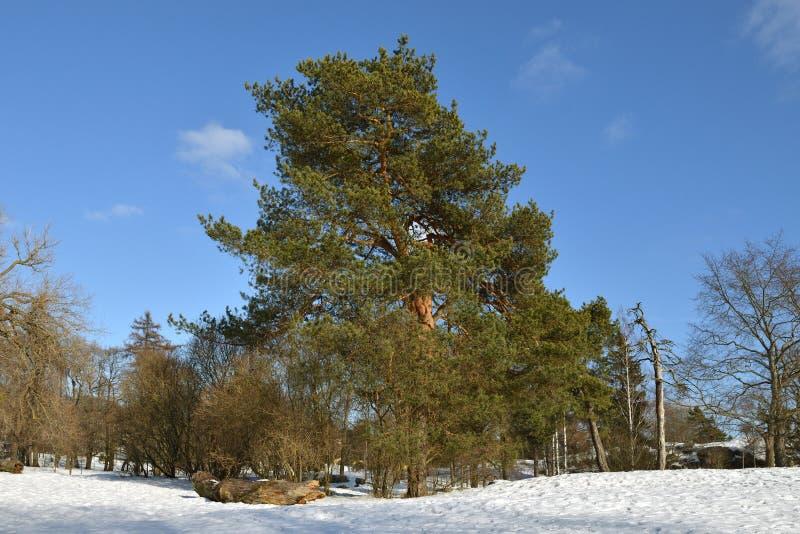 Parkowy Kaivopuisto w wczesnej wiośnie w Helsinki, Suomi zdjęcie royalty free