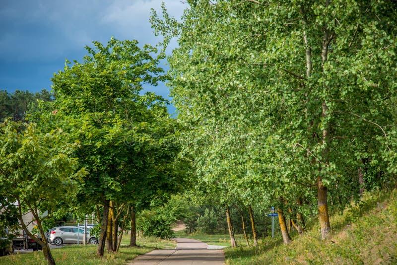 Parkowy las i asfaltowa chodząca ścieżka fotografia royalty free