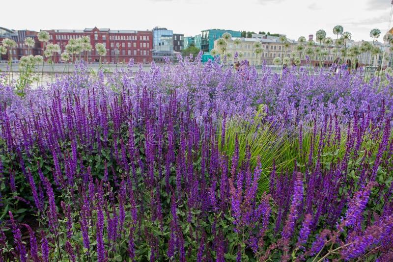 Parkowy Muzeon - ładny kwiatu łóżko zdjęcia stock