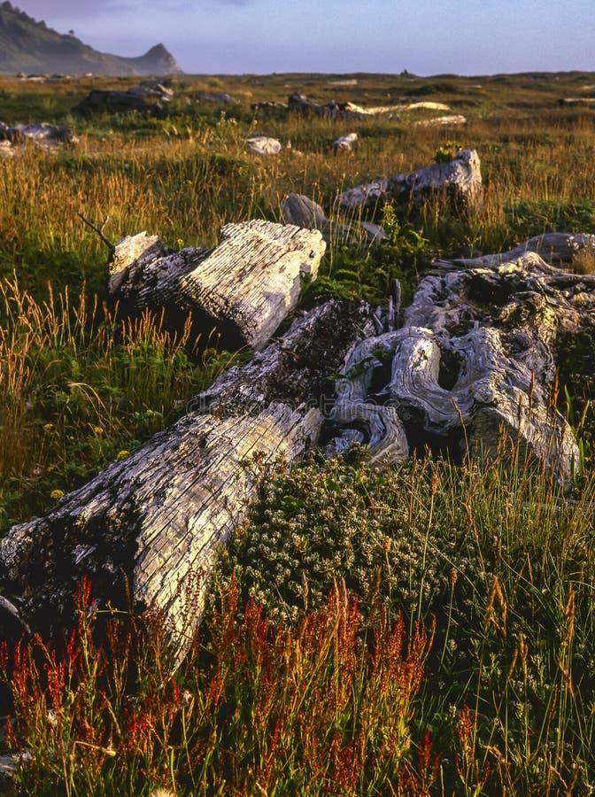 parkowy Patrick punktu s stan zdjęcie stock