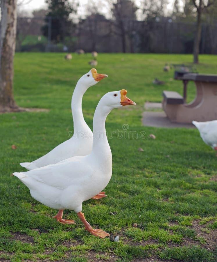 Download Parkowy spacer zdjęcie stock. Obraz złożonej z trawy - 13335322