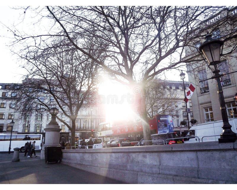 Parkowy Treeline fotografia royalty free