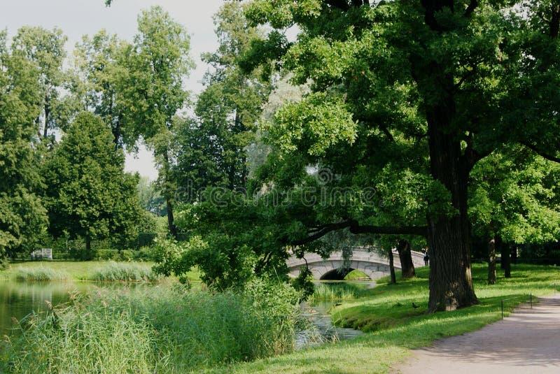 Parkowy widok fotografia stock