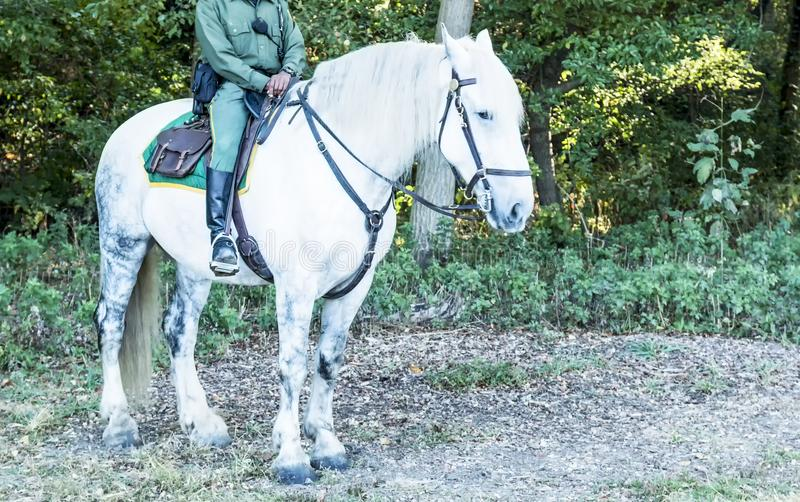 A parks police officer on a white horse. A parks police officer in The Bronx New York sits on a large white horse at VanCortlandt Park royalty free stock photo