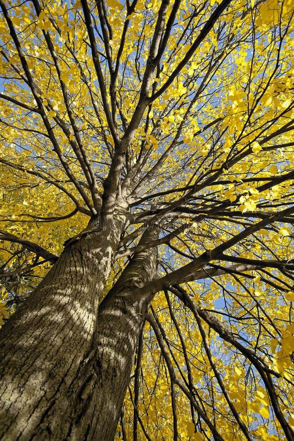 Parks, Wälder und Bäume im Herbst lizenzfreie stockfotografie