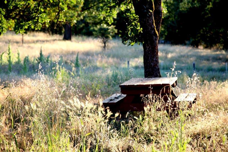 parkside stolik na piknik zdjęcia royalty free
