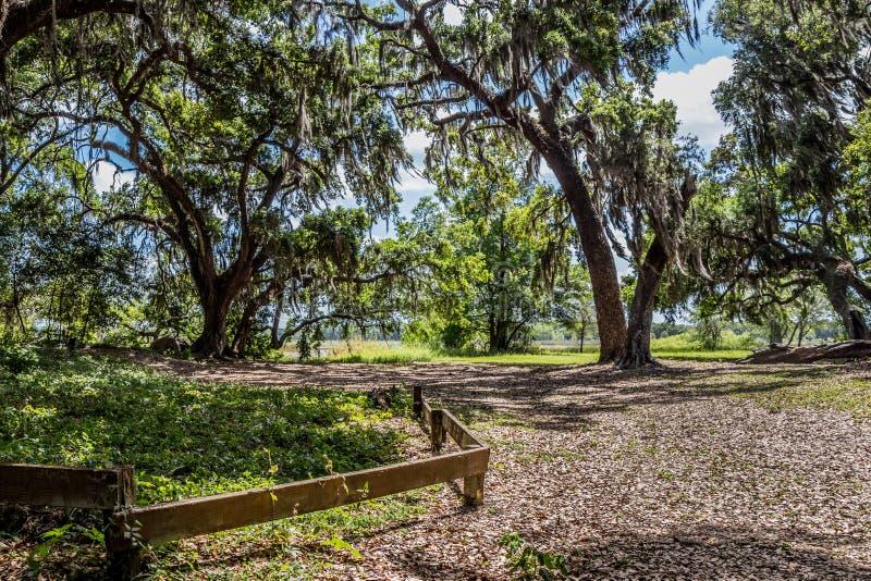 Parksleep bij de Wildernispark van het Bemanningenmeer, Florida stock afbeelding