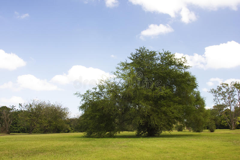 Parktree Arkivfoto