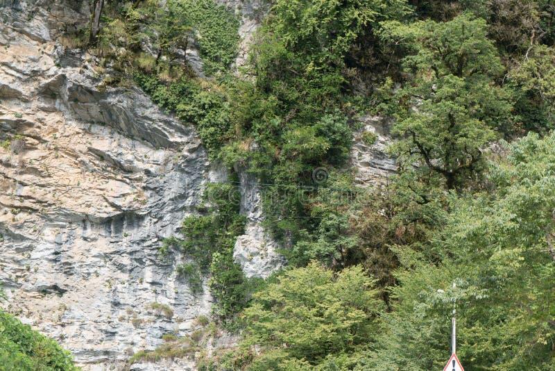 parku narodowego Utah rock drzewny zion zdjęcie royalty free