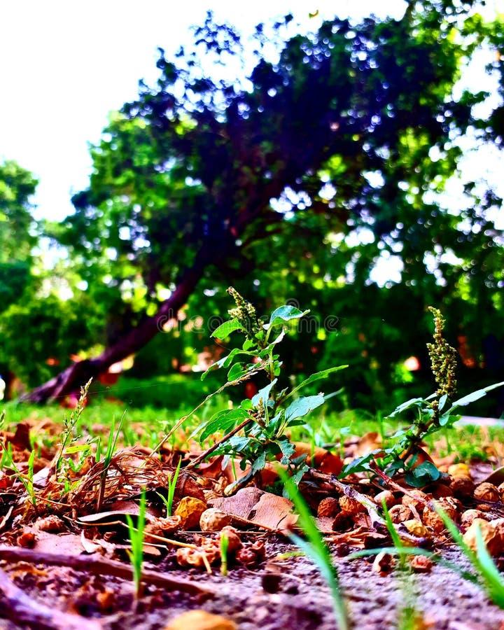 Parkuje Drzewa obrazy stock