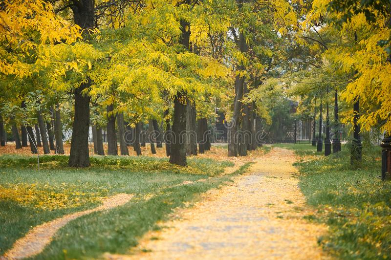 Parkway with autumn trees in park, green grass and yellow leaves stock image