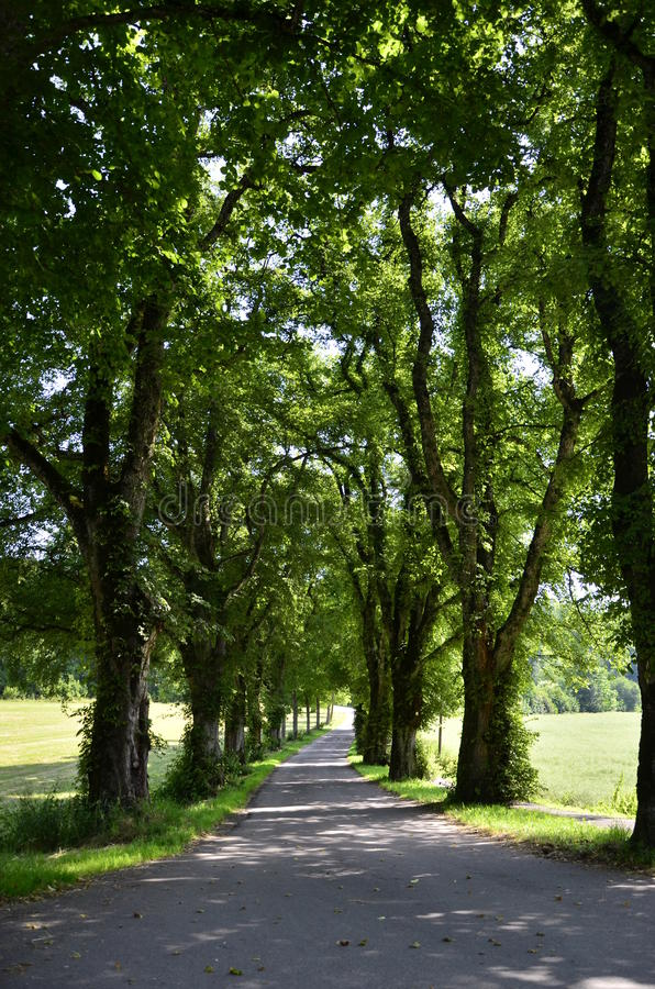 Parkway oldest trees. Green grassland with old trees bounded in a parkway near the forest royalty free stock photo