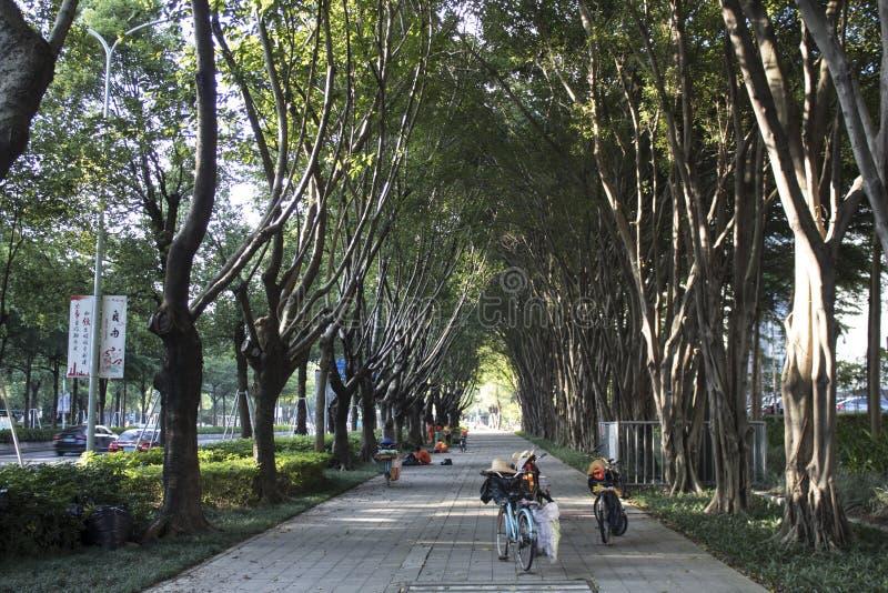 Parkweg innerhalb an der städtischen Stadt lizenzfreies stockfoto