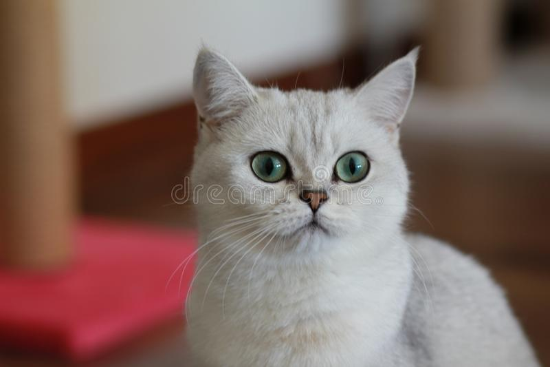 Parla katten royaltyfri bild