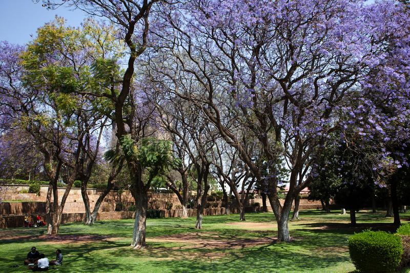 Parliament garden in Windhoek, Namibia. Parliament garden with blossoming violet trees and people having lunch at the lawn in Windhoek, Namibia. September 2015 stock photos