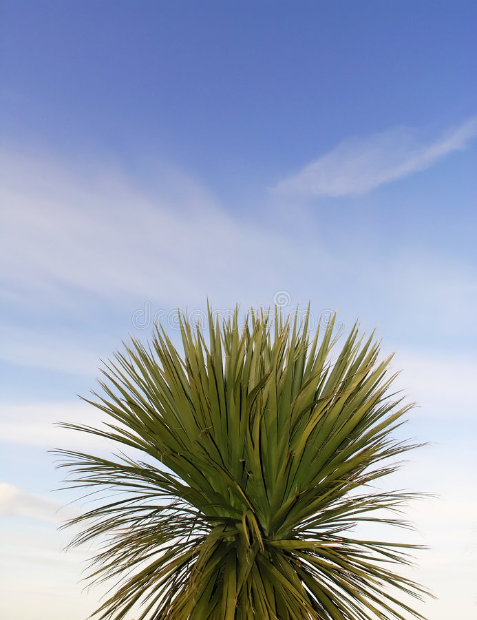 Parm tree leaves royalty free stock images