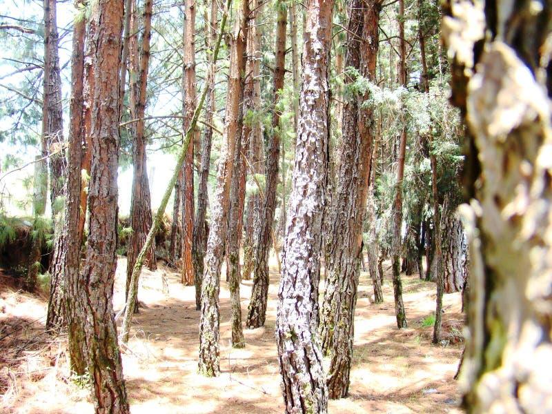 Parmi des arbres dans une jeune forêt 2 images stock