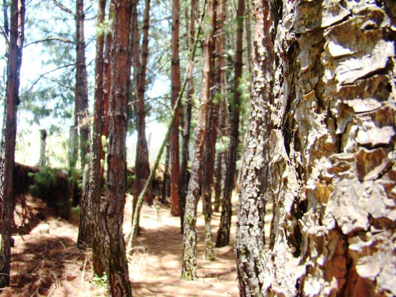 Parmi des arbres dans une jeune forêt photo libre de droits