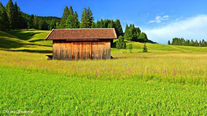 Parmi l'arome des herbes et des herbes images libres de droits