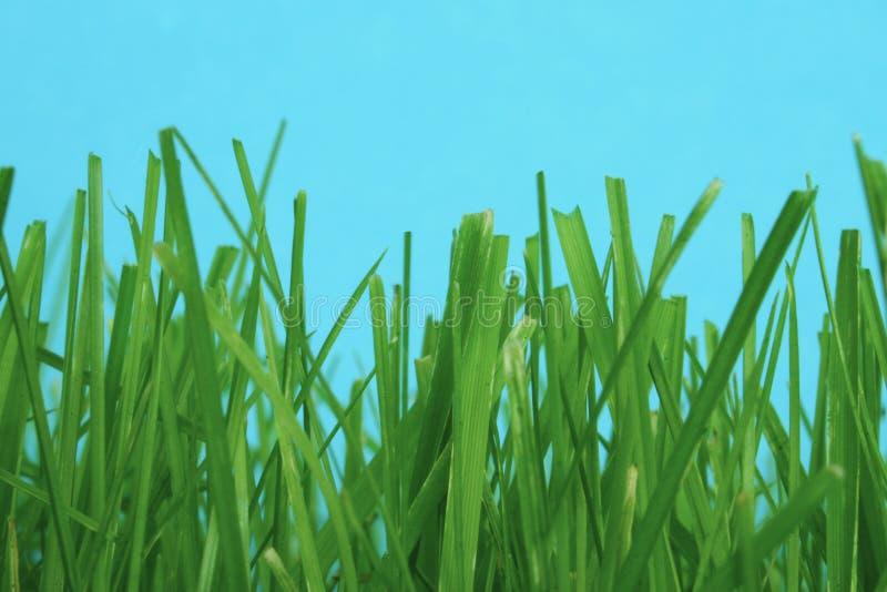 Parmi l'herbe image stock